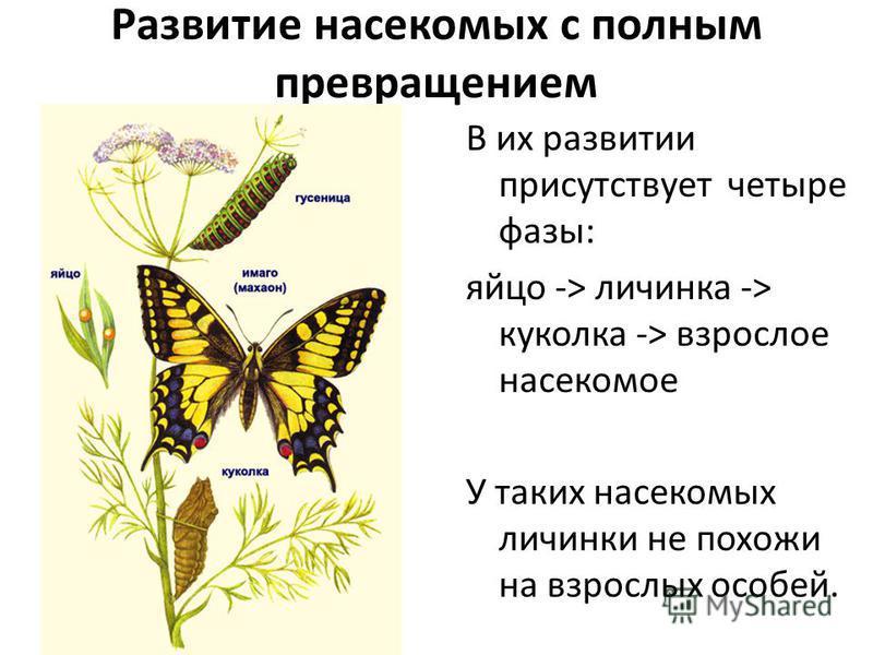 Развитие насекомых с полным