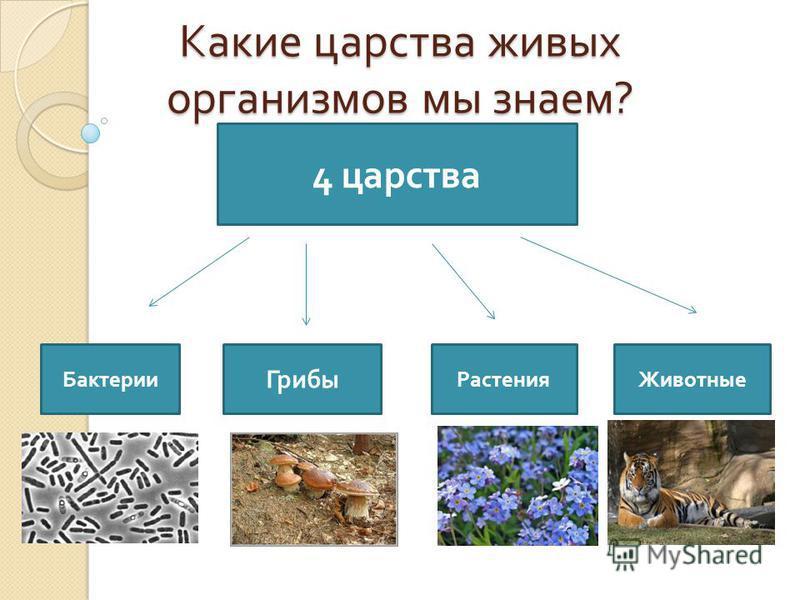 Биология 5 класс открытый класс