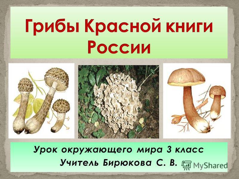 Урок окружающего мира 3 класс Учитель Бирюкова С. В.