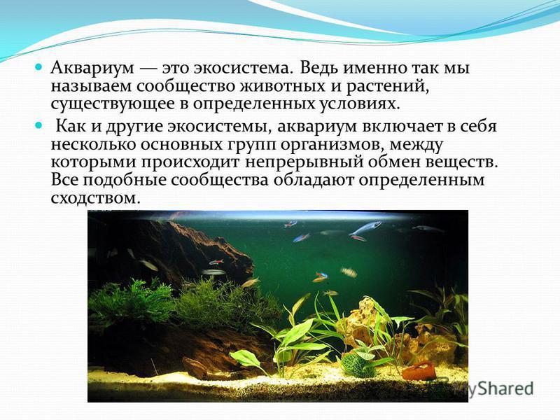 Аквариум это экосистема. Ведь именно так мы называем сообщество животных и растений, существующее в определенных условиях. Как и другие экосистемы, аквариум включает в себя несколько основных групп организмов, между которыми происходит непрерывный об