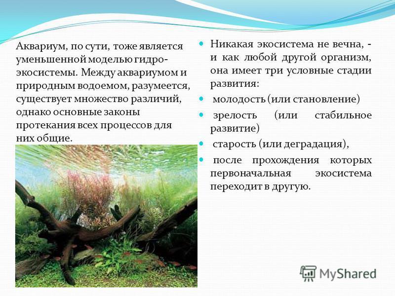 Аквариум, по сути, тоже является уменьшенной моделью гидро- экосистемы. Между аквариумом и природным водоемом, разумеется, существует множество различий, однако основные законы протекания всех процессов для них общие. Никакая экосистема не вечна, - и