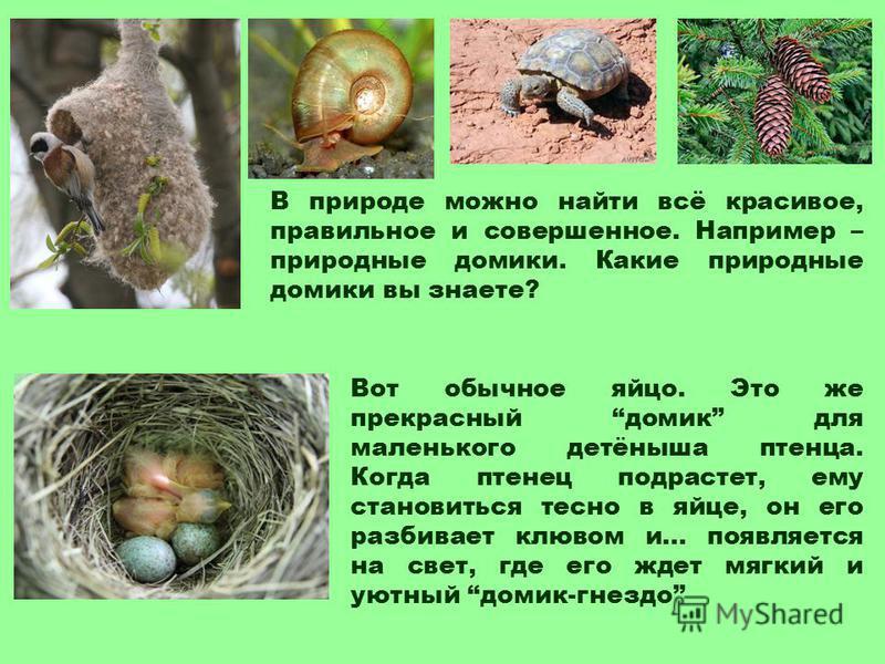В природе можно найти всё красивое, правильное и совершенное. Например – природные домики. Какие природные домики вы знаете? Вот обычное яйцо. Это же прекрасный домик для маленького детёныша птенца. Когда птенец подрастет, ему становиться тесно в яйц