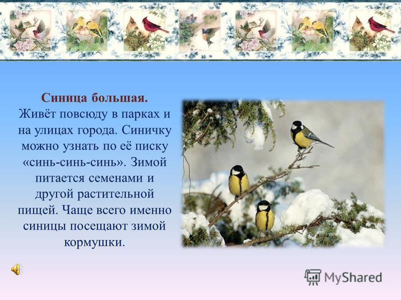 Сойка. Яркая подвижная птица. Зимой охотно поедают семена и плоды разнообразных растений, а также личинки насекомых, зимующих на деревьях. Из-за найденного корма всегда поднимают ссору с громким криком – «гэ-гэ- гэ».