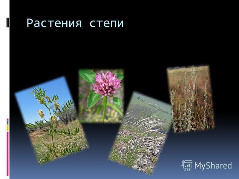 Растения степи