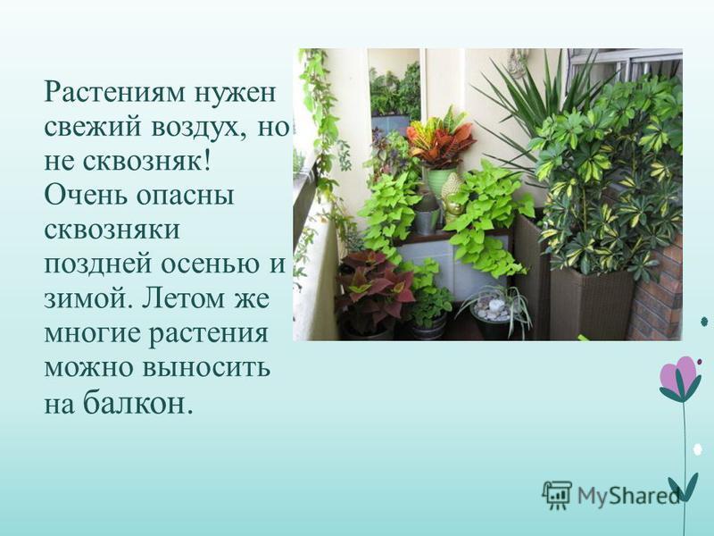 Растениям нужен свежий воздух, но не сквозняк! Очень опасны сквозняки поздней осенью и зимой. Летом же многие растения можно выносить на балкон.