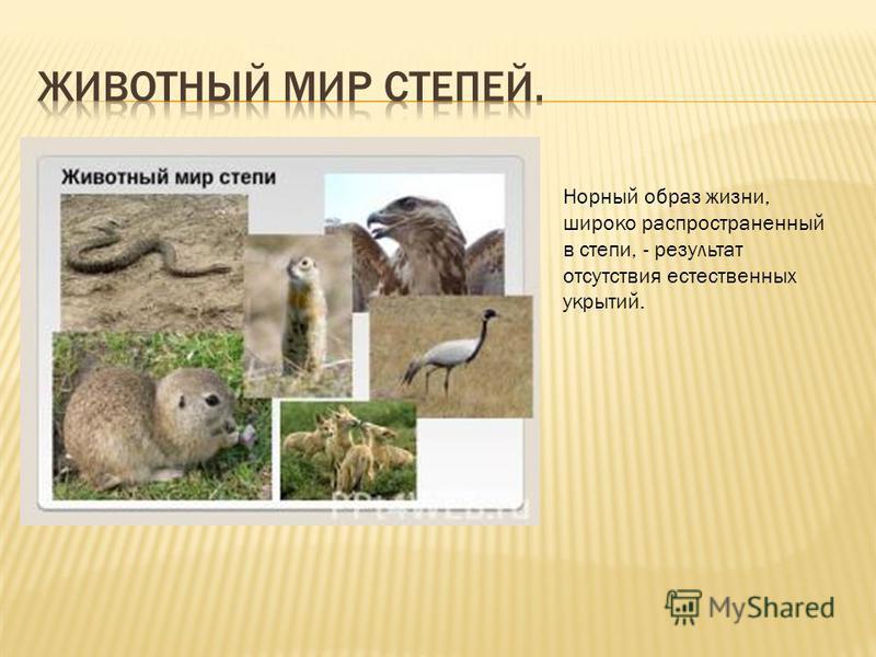 Норный образ жизни, широко распространенный в степи, - результат отсутствия естественных укрытий.