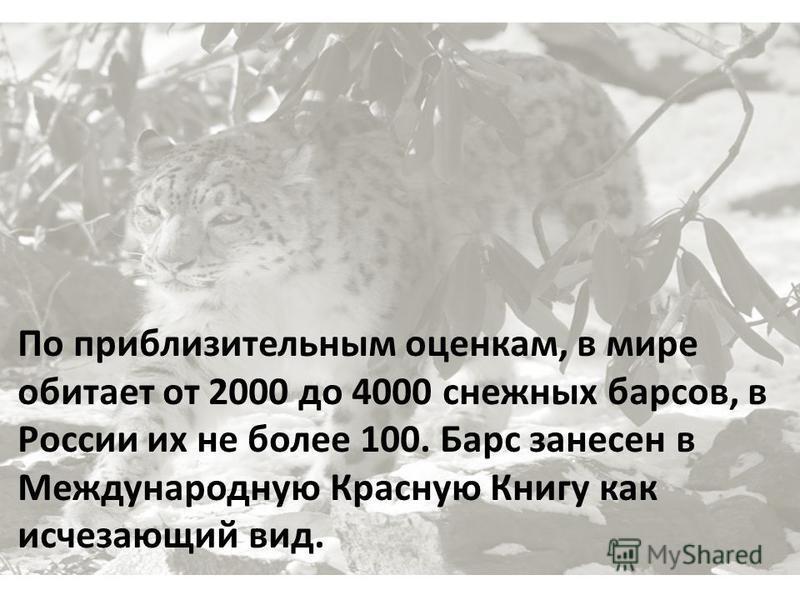 По приблизительным оценкам, в мире обитает от 2000 до 4000 снежных барсов, в России их не более 100. Барс занесен в Международную Красную Книгу как исчезающий вид.