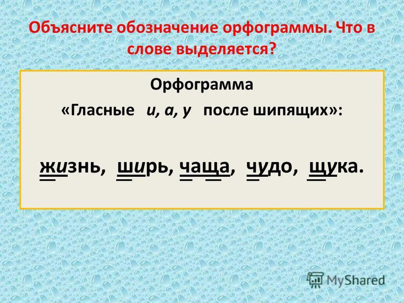 Объясните обозначение орфограммы. Что в слове выделяется? Орфограмма «Гласные и, а, у после шипящих»: жизнь, ширь, чаща, чудо, щука.