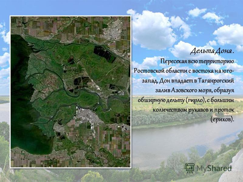 Дельта Дона. Пересекая всю территорию Ростовской области с востока на юго- запад, Дон впадает в Таганрогский залив Азовского моря, образуя обширную дельту (гирло), с большим количеством рукавов и проток (ериков).