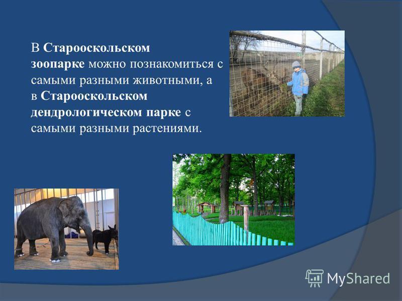 В Старооскольском зоопарке можно познакомиться с самыми разными животными, а в Старооскольском дендрологическом парке с самыми разными растениями.