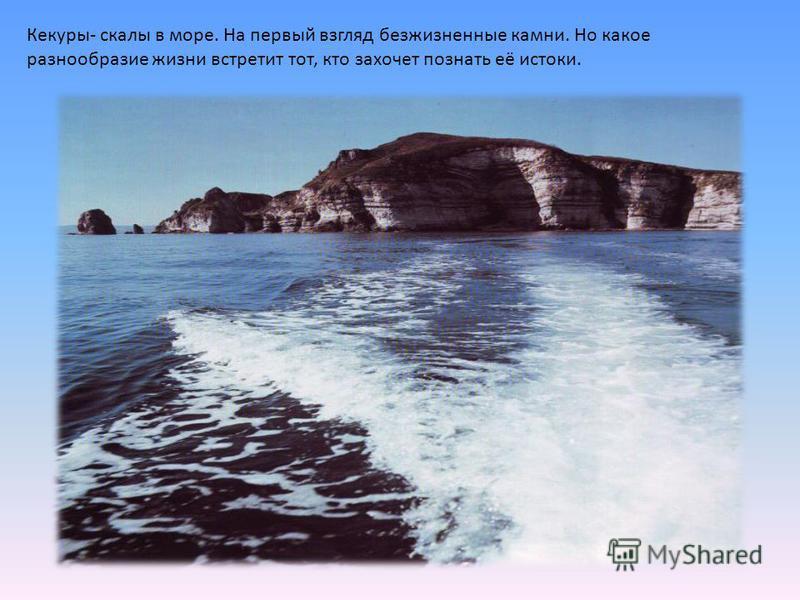 Кекуры- скалы в море. На первый взгляд безжизненные камни. Но какое разнообразие жизни встретит тот, кто захочет познать её истоки.