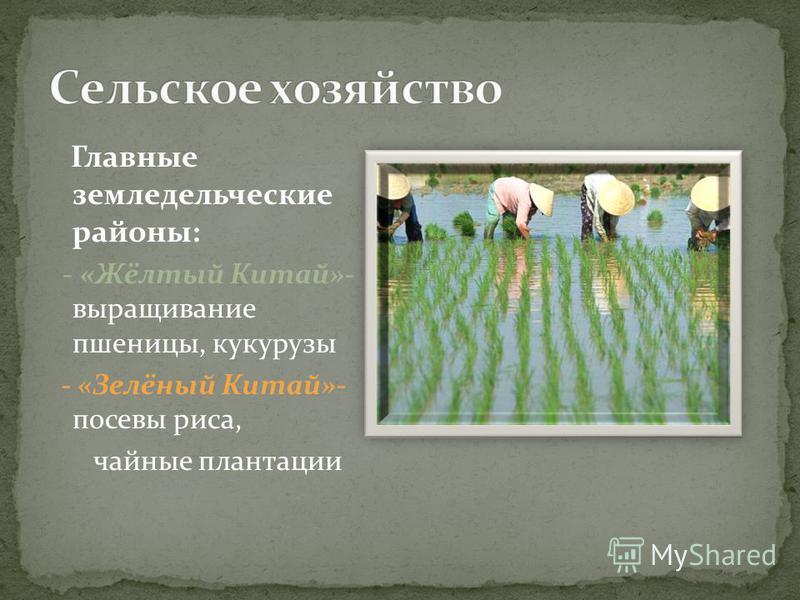 Главные земледельческие районы: - «Жёлтый Китай»- выращивание пшеницы, кукурузы - «Зелёный Китай»- посевы риса, чайные плантации