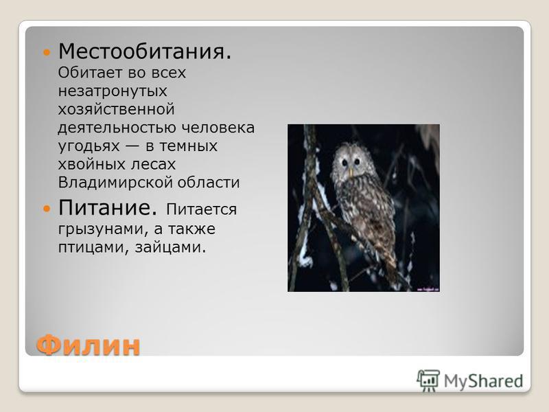 Филин Местообитания. Обитает во всех незатронутых хозяйственной деятельностью человека угодьях в темных хвойных лесах Владимирской области Питание. Питается грызунами, а также птицами, зайцами.