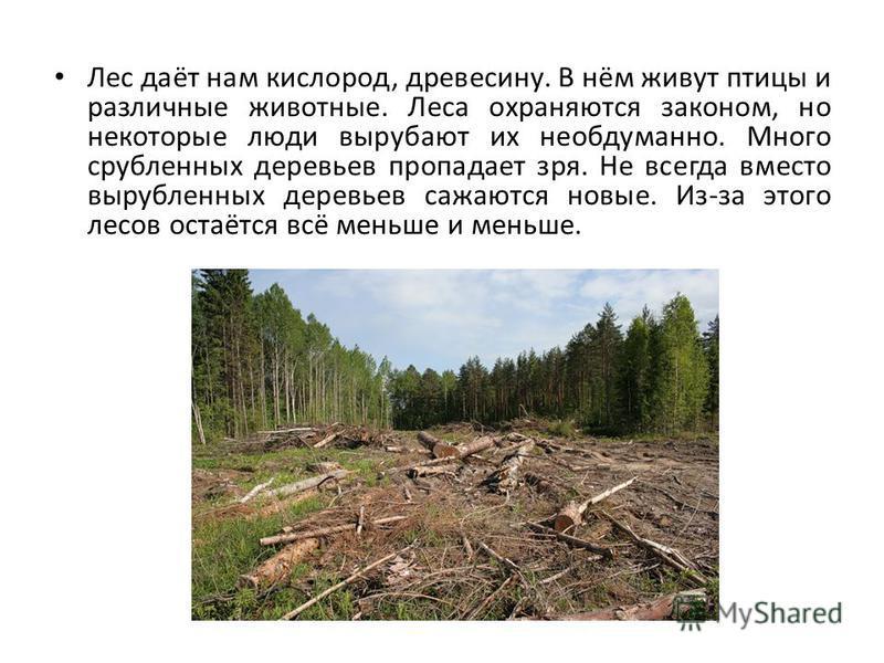 Лес даёт нам кислород, древесину. В нём живут птицы и различные животные. Леса охраняются законом, но некоторые люди вырубают их необдуманно. Много срубленных деревьев пропадает зря. Не всегда вместо вырубленных деревьев сажаются новые. Из-за этого л