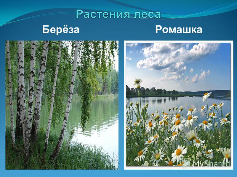 Гдз по окружающему миру 3 класс тема пермскому краю