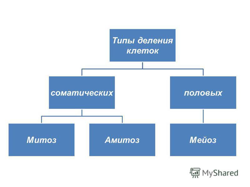 Типы деления клеток соматических Митоз Амитоз половых Мейоз