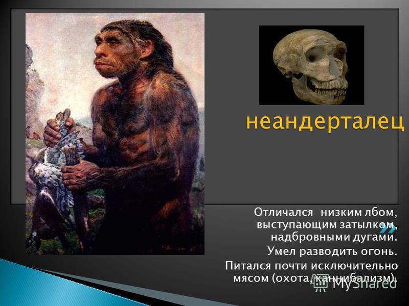 Жил 200 000 – 28 000 лет назад; Рост 150 - 158 см, коренастое тело с массивными мышцами. Объем мозга - как у современных людей. Отличался низким лбом, выступающим затылком, надбровными дугами. Умел разводить огонь. Питался почти исключительно мясом (