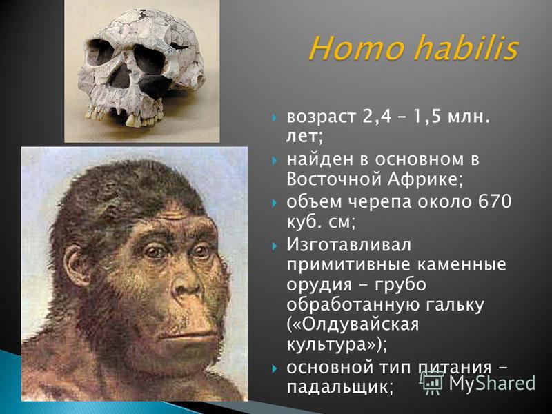 возраст 2,4 – 1,5 млн. лет; найден в основном в Восточной Африке; объем черепа около 670 куб. см; Изготавливал примитивные каменные орудия - грубо обработанную гальку («Олдувайская культура»); основной тип питания - падальщик;
