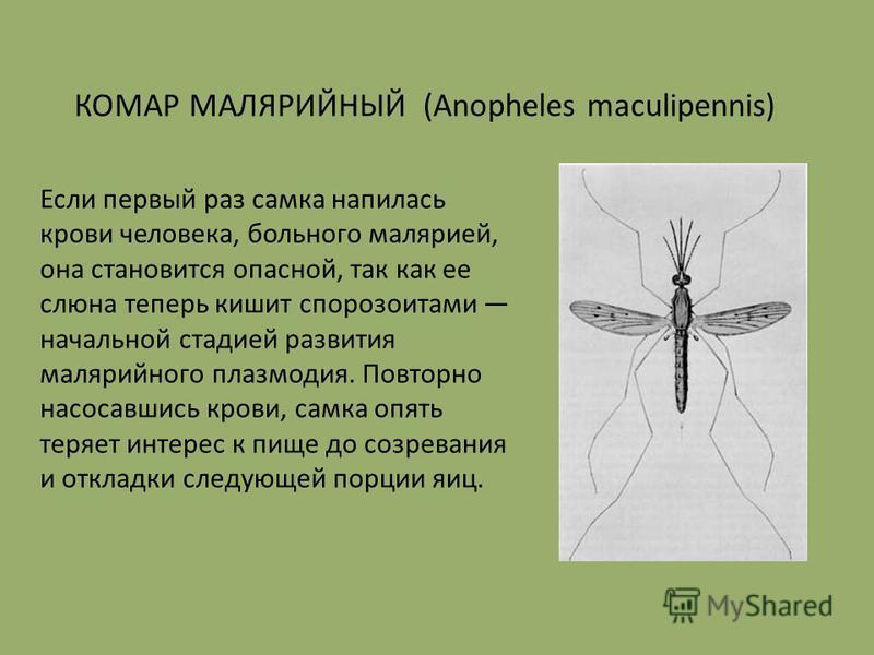 Если первый раз самка напилась крови человека, больного малярией, она становится опасной, так как ее слюна теперь кишит спорозоитами начальной стадией развития малярийного плазмодия. Повторно насосавшись крови, самка опять теряет интерес к пище до со