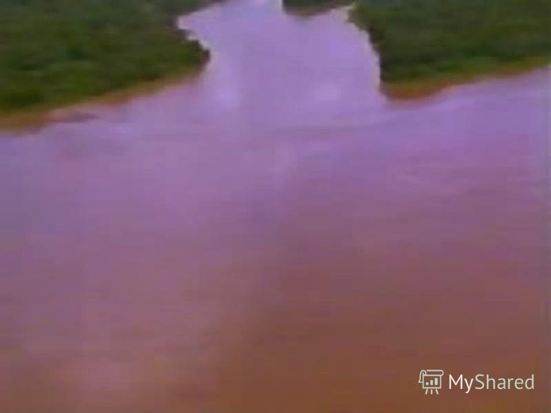 Животные рек и болот анакондапиранья кайман