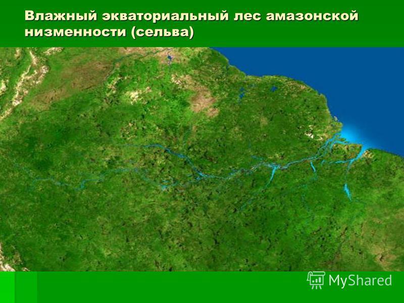 ЭКВАТОРИАЛЬНЫЕ ЛЕСА Характерная Характерная черта материка материка – наличие труднопроходимых труднопроходимых вечнозеленых экваториальных экваториальных лесов. лесов. Они отличаются отличаются исключительной густотой, густотой, тенистостью, богатст