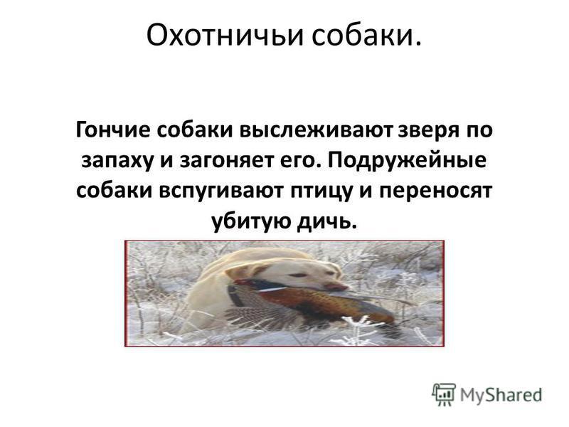 Охотничьи собаки. Гончие собаки выслеживают зверя по запаху и загоняет его. Подружейные собаки вспугивают птицу и переносят убитую дичь.
