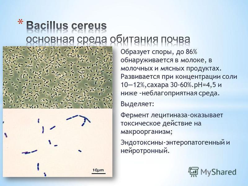 Образует споры, до 86% обнаруживается в молоке, в молочных и мясных продуктах. Развивается при концентрации соли 1012%,сахара 30-60%.рН=4,5 и ниже –неблагоприятная среда. Выделяет: Фермент лецитиназа-оказывает токсическое действие на макроорганизм; Э