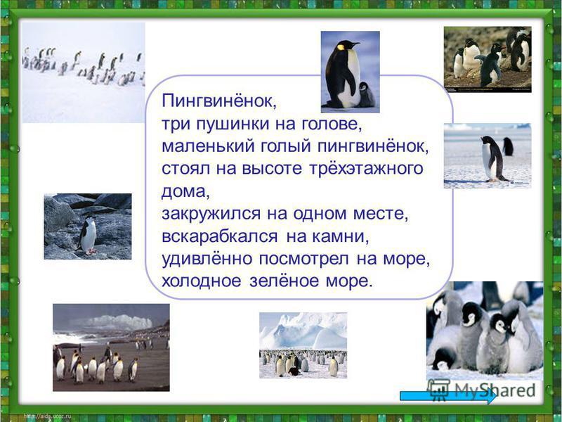 Пингвинёнок, три пушинки на голове, маленький голый пингвинёнок, стоял на высоте трёхэтажного дома, закружился на одном месте, вскарабкался на камни, удивлённо посмотрел на море, холодное зелёное море.