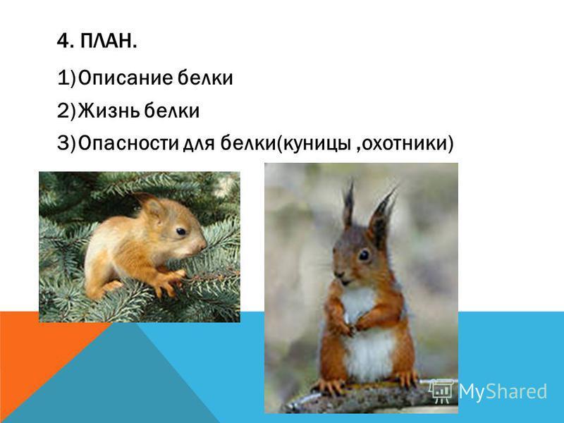 4. ПЛАН. 1)Описание белки 2)Жизнь белки 3)Опасности для белки(куницы,охотники)