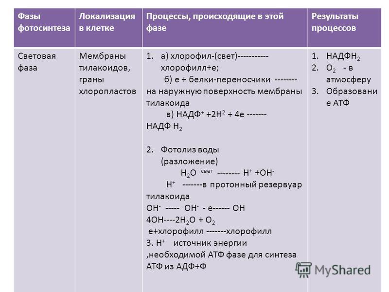 Фазы фотосинтеза Локализация в клетке Процессы, происходящие в этой фазе Результаты процессов Световая фаза Мембраны тилакоидов, граны хлоропластов 1.а) хлорофилл-(свет)----------- хлорофиллл+е; б) е + белки-переносчики -------- на наружную поверхнос