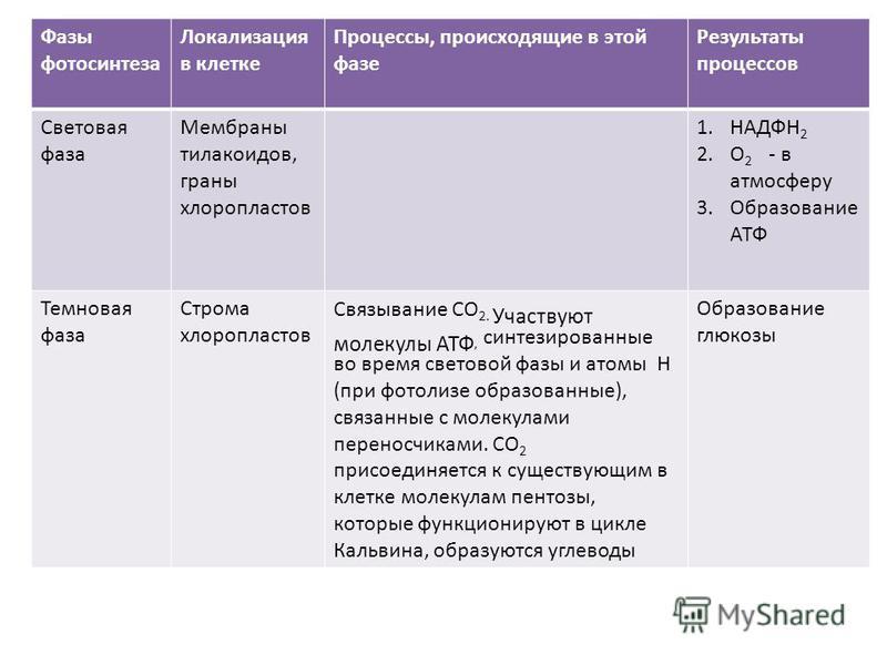 Таблица по биологии 10 класс фотосинтез