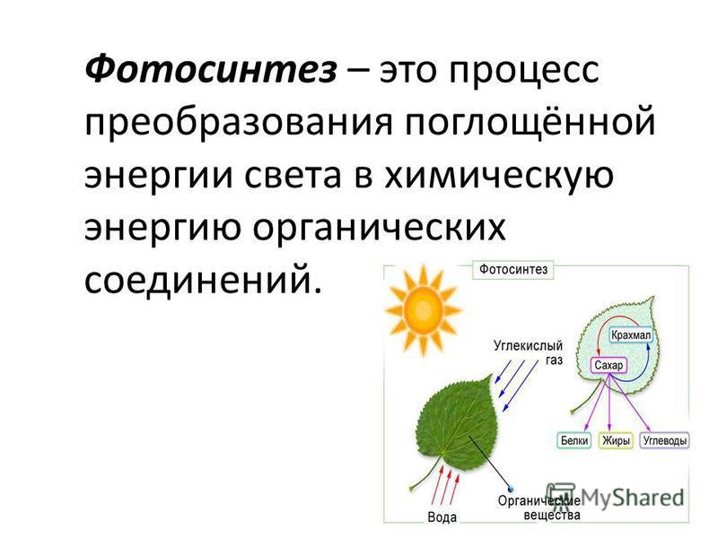 Фотосинтез – это процесс преобразования поглощённой энергии света в химическую энергию органических соединений.