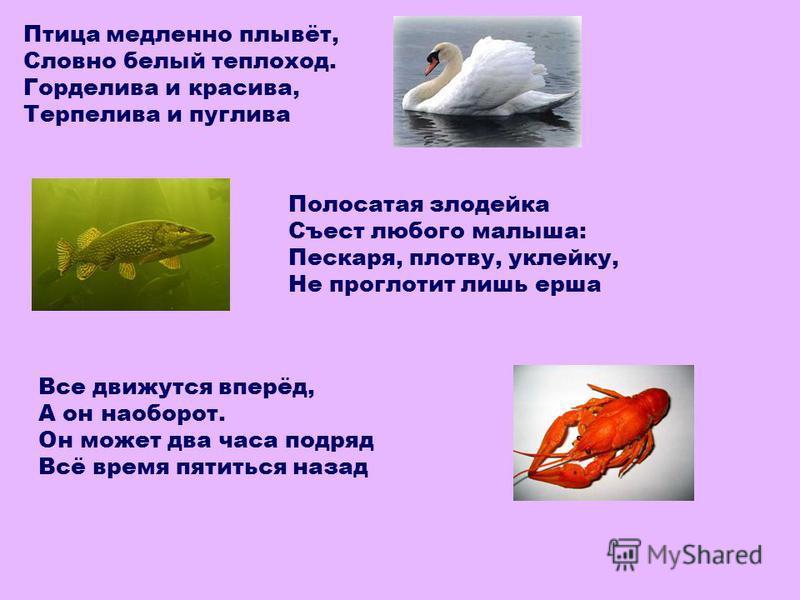 Птица медленно плывёт, Словно белый теплоход. Горделива и красива, Терпелива и пуглива Полосатая злодейка Съест любого малыша: Пескаря, плотву, уклейку, Не проглотит лишь ерша Все движутся вперёд, А он наоборот. Он может два часа подряд Всё время пот