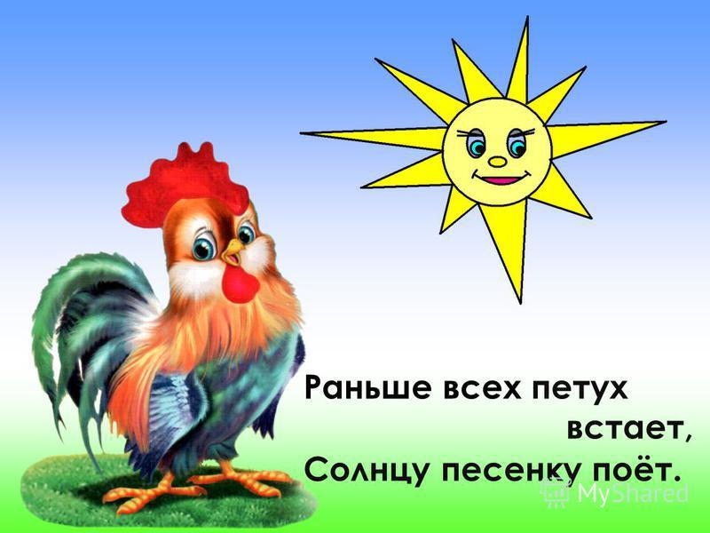 Раньше всех петух встает, Солнцу песенку поёт.