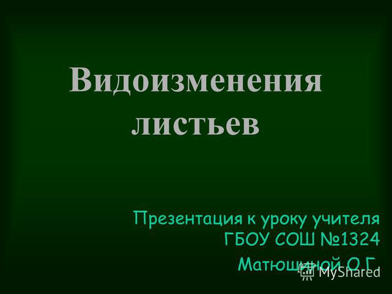 Видоизменения листьев Презентация к уроку учителя ГБОУ СОШ 1324 Матюшиной О.Г.