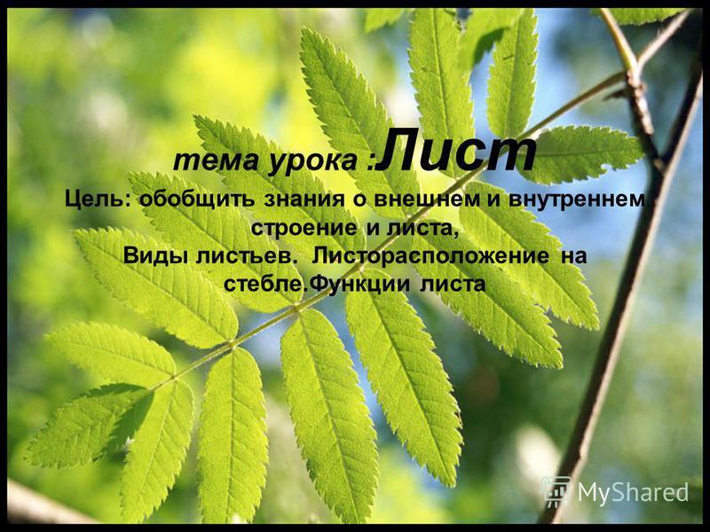 тема урока : Лист Цель: обобщить знания о внешнем и внутреннем строение и листа, Виды листьев. Листорасположение на стебле.Функции листа
