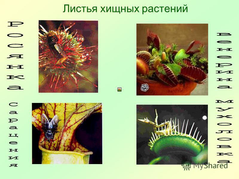 Листья хищных растений