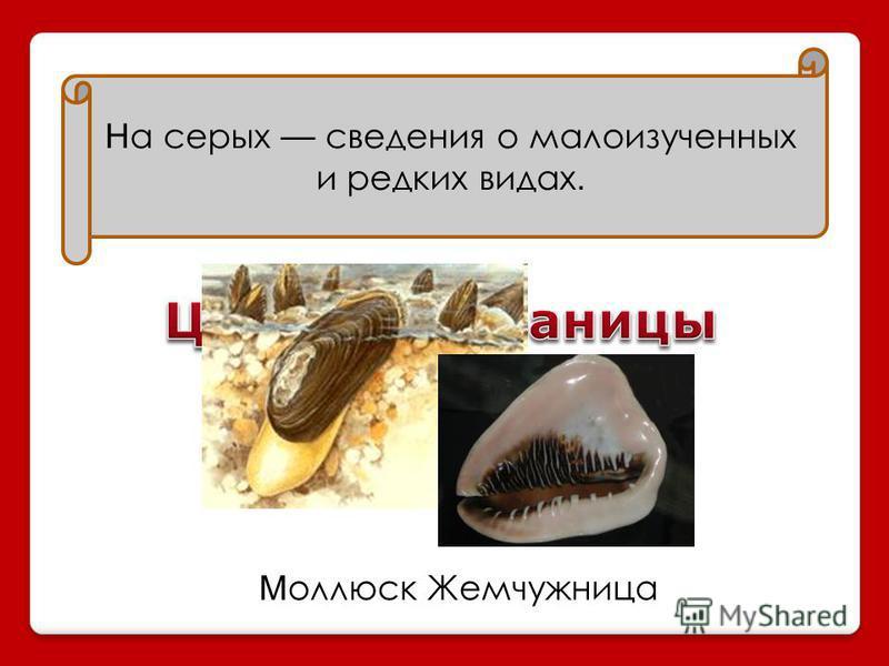 Н а серых сведения о малоизученных и редких видах. М оллюск Жемчужница