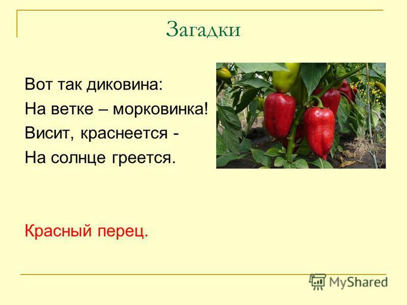 Цветок петуния  выращивание из семян фото петунии уход