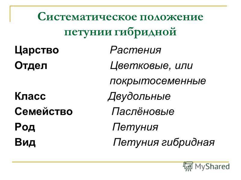Систематическое положение петунии гибридной Царство Растения Отдел Цветковые, или покрытосеменные Класс Двудольные Семейство Паслёновые Род Петуния Вид Петуния гибридная