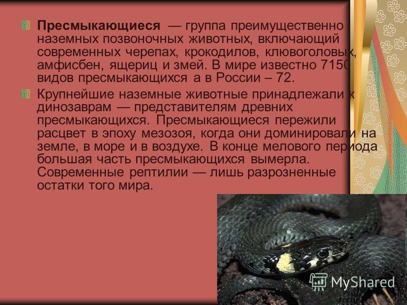 Пресмыкающиеся группа преимущественно наземных позвоночных животных, включающий современных черепах, крокодилов, клювоголовых, амфисбен, ящериц и змей. В мире известно 7150 видов пресмыкающихся а в России – 72. Крупнейшие наземные животные принадлежа