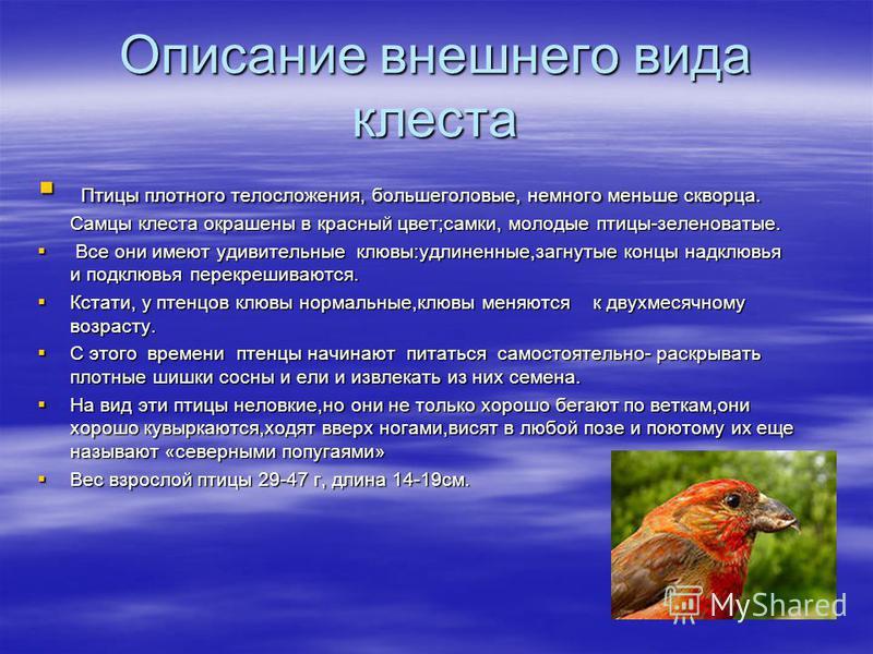 Описание внешнего вида клеййййста Птицы плотного телосложения, большеголовые, немного меньше скворца. Самцы клеййййста окрашены в красный цвет;самки, молодые птицы-зеленоватые. Птицы плотного телосложения, большеголовые, немного меньше скворца. Самцы