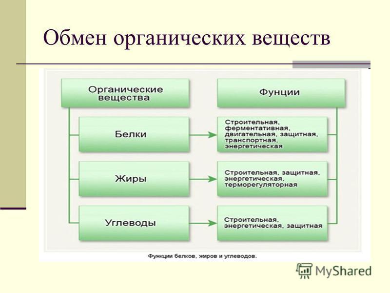 Обмен органических веществ