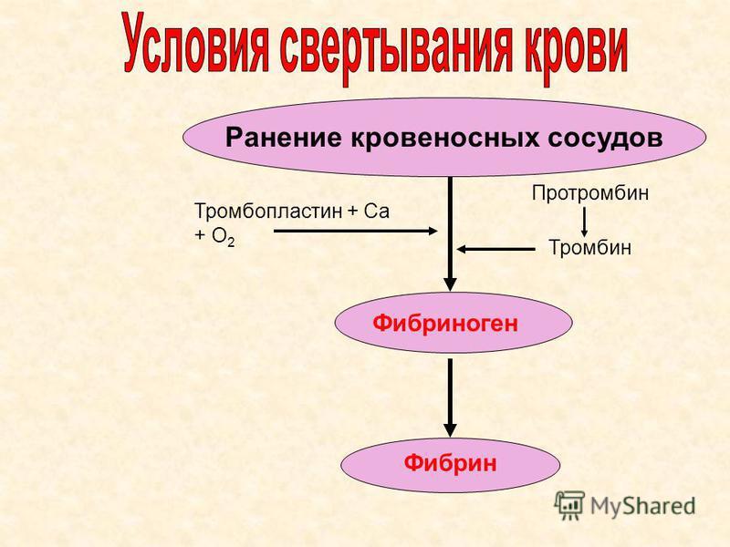 Ранение кровеносных сосудов Фибрин Фибриноген Тромбопластин + Са + О 2 Протромбин Тромбин