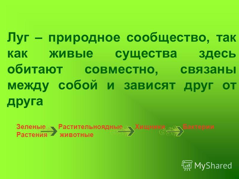 Луг – природное сообщество, так как живые существа здесь обитают совместно, связаны между собой и зависят друг от друга Зеленые Растительноядные Хищники Бактерии Растения животные