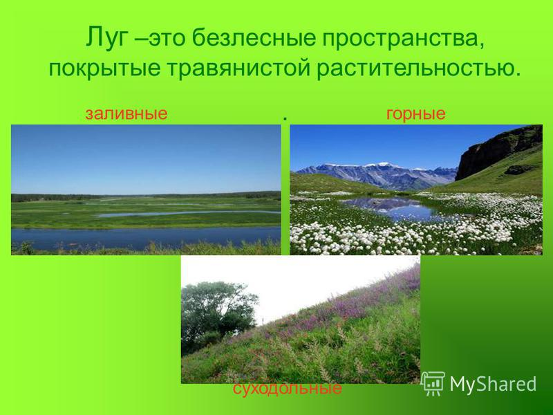Луг –это безлесные пространства, покрытые травянистой растительностью.. заливные суходольные горные