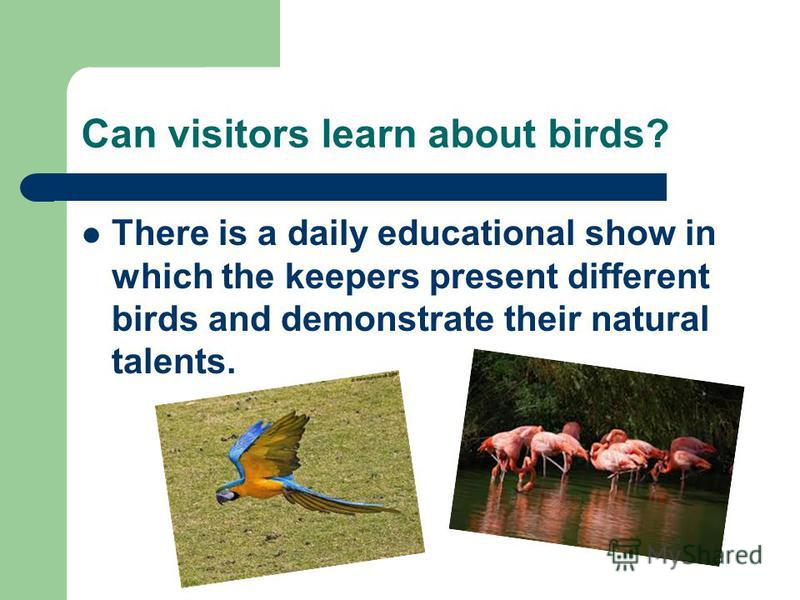 Can visitors learn about birds? There is a daily educational show in which the keepers present different birds and demonstrate their natural talents.