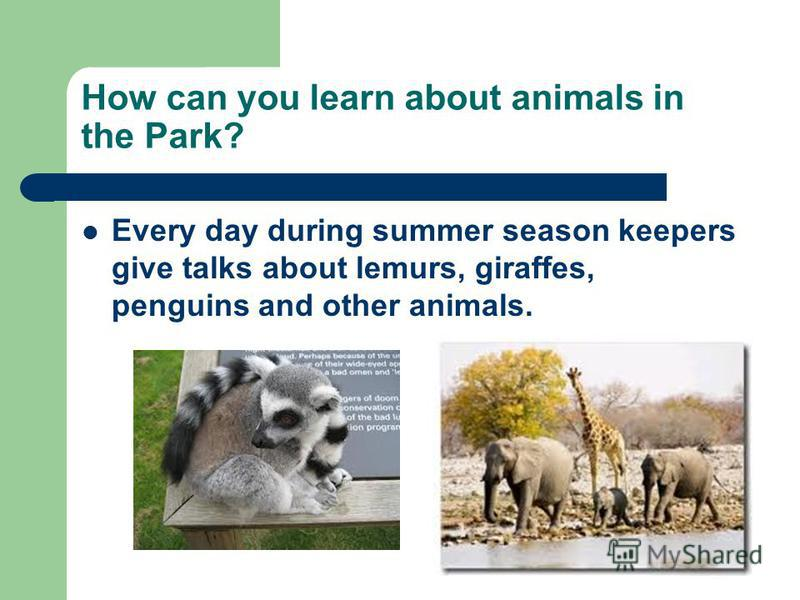 How can you learn about animals in the Park? Every day during summer season keepers give talks about lemurs, giraffes, penguins and other animals.