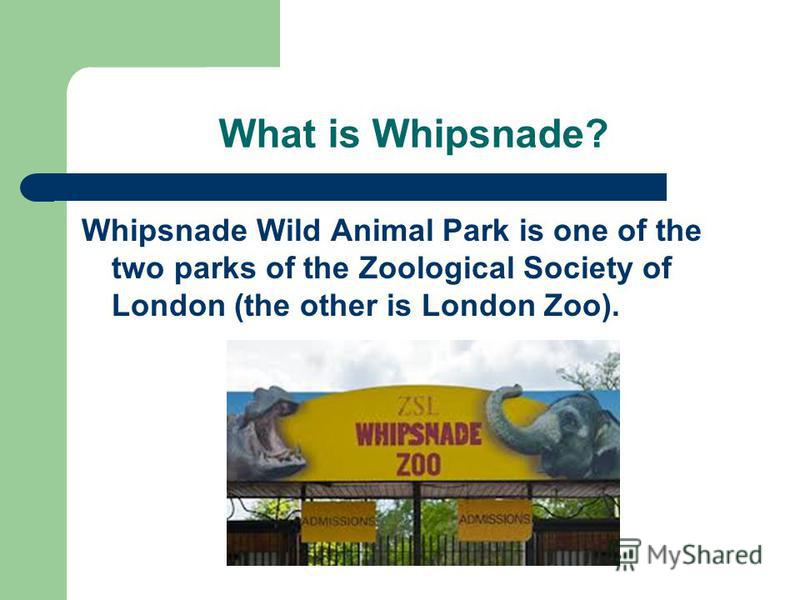 What is Whipsnade? Whipsnade Wild Animal Park is one of the two parks of the Zoological Society of London (the other is London Zoo).