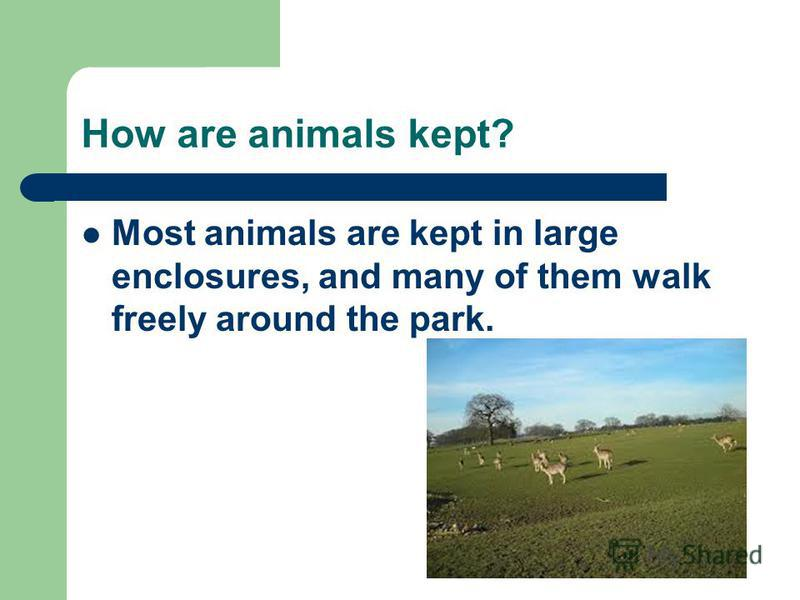 How are animals kept? Most animals are kept in large enclosures, and many of them walk freely around the park.